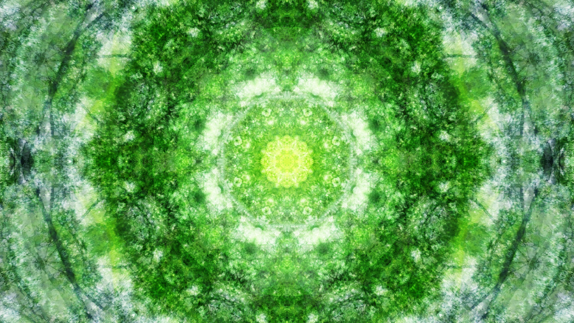 Emitting Velocity - Mohican Forest by Matt Swift Still 1